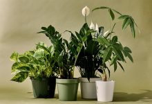 Photo of How To Keep Your Houseplants Healthy & Thriving?