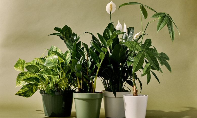 How To Keep Your Houseplants Healthy & Thriving?